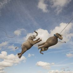 """Elephant Trapeze"" by John Lund: Two elephants perform flying trapeze high in the sky in this humorous elephant picture that illustrates concepts such as strength, agility, skill and daring do. Risk and Team work are other concept..."