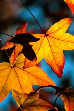 nice colors - I love fall!!!!