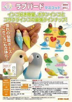 Image result for kotori tai birds