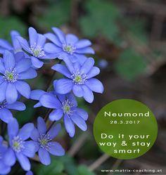 Do it your way, but stay smart! Neumond im Widder: Maskuline Kräfte des Widders bündeln sich in diesen Tagen und die Frühlingsenergien sind nun besonders stark auf vielen Ebenen zu spüren. Ein unge…