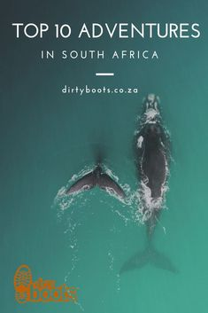 View a list of boat based whale watching operators in Southern Africa - Dirty Boots Humpback Whale Migration, Dolphin Encounters, African Penguin, Boat Companies, V&a Waterfront, World Cruise, Whale Watching Tours, The V&a, North Coast