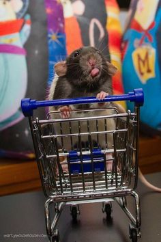 Rats are not afraid to dish out a little ~'tude~ every once in a while.