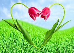 Tulipany, Serce, Trawa, Miłosne
