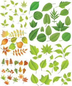 """5 sets with 68 vector spring green leaves templates for your spring related cards, posters, web design elements, illustrations, etc. Format: EPS stock vector clip art. Free for download. Vector set name: """"Spring green leaves vector"""". Theme tags: vector leaves,…"""