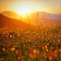 it's time for spring ... - Sandra Bartocha