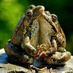 Pictures of the year bizarre creatures and funny animal photos (With images) Funny Animal Photos, Funny Animals, Cute Animals, Funny Images, Bing Images, Wild Animals, Funny Photos, Baby Animals, Funny Frogs