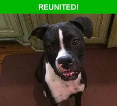 Great news! Happy to report that Ella has been reunited and is now home safe and sound! :)