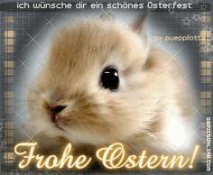 Die 143 Besten Bilder Von Frohe Ostern In 2019 Happy Easter