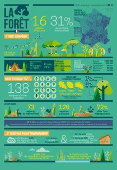 infographie sur la forêt française