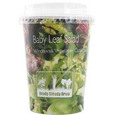 Baby Leaf Salad - Windowsill Vegetable Collection