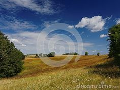 Idyllic view on meadow in summer