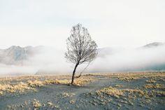 tree   orientalauthentic   VSCO Grid™