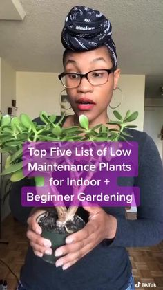Inside Plants, Room With Plants, Indoor Plants Low Light, Easy House Plants, Plant Aesthetic, House Plant Care, Low Maintenance Plants, Green Life, Green Plants