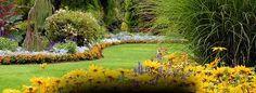 grass circle and flower border Landscape Maintenance, Screen Shot, Yellow Flowers, Grass, Golf Courses, Backyard, Image, Ideas, Patio