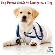 A lump appears on your dog. What should you do next? Do not panic but do not sit idly and hope it goes away.