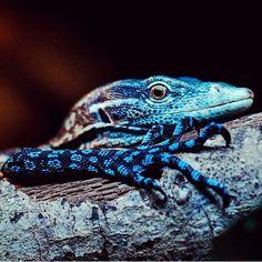 Types Of Pet Reptiles Nature Animals, Animals And Pets, Cute Animals, Cute Reptiles, Reptiles And Amphibians, Chameleon Lizard, Salamander, Monitor Lizard, Tier Fotos