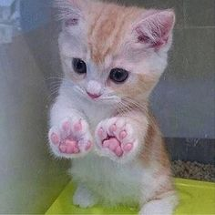 27 great cat pictures when life is shitty again - And this tiny kitten with the perfect paws. And this tiny kitten with the perfect paws. And this ti - Cute Little Animals, Cute Funny Animals, Funny Cats, Beautiful Cats, Animals Beautiful, Tiny Kitten, Photo Chat, Cute Cats And Kittens, Kitty Cats