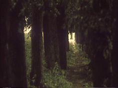 [The Lonely Voice of Man] Alexander Sokurov 1987