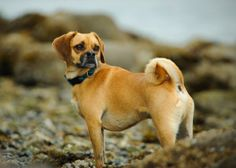 We know which dog breeds (and mixes) are the most popular and even which ones are on the rise. But a
