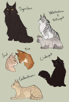 Redesigned again? sketches by AnnMY Warrior Cats Comics, Warrior Cats Series, Warrior Cats Fan Art, Warrior Cats Books, Warrior Cat Drawings, Warrior Cats Art, Cat Comics, Cat Anatomy, Cat Character