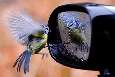 Birds and Butterflies | Dusky's Wonders