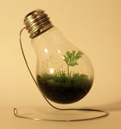 Light Bulb Terrariums - so gorgeous. And you can use chicken wire to make the stand. Site has different ideas for lightbulb terrariums.