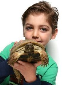 """""""Russian Tortoise"""" is the more common name than """"Horsefield Tortoise"""" actually! Keep that in mind when caring and product buying for your pet!"""