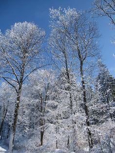 Winter in Eifel, Germany