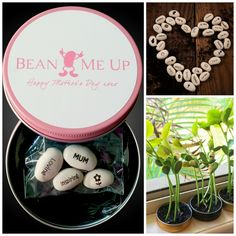 These amazing beans GROW with special messages intact! Such a unique gift idea for a teacher, child or for any occasion!