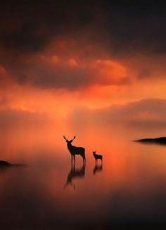 The Deer at Sunset (by Jenny Woodward).:
