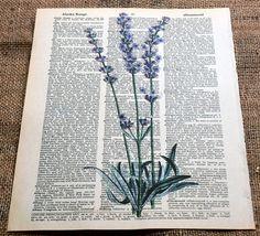 Lavender by oRuffnie