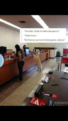 Funny dog memes: de-paws-it; bank meme