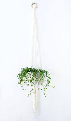 Suspension de plante en macramé couleur Craie 125 cm par BalkyBird Cuisine  Jaune, Jardin Extraordinaire be8ff6452a91