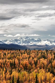 17 Stunning Road Trip Destinations for the Best Fall Foliage in the USA Autumn . 17 Stunning Road Trip Destinations for the Best Fall Foliage in the USA Autumn in Alaska + 17 Plac Autumn Scenery, Autumn Trees, Autumn Leaves, Wow Photo, Road Trip Destinations, Holiday Destinations, Autumn Cozy, Autumn Fall, Autumn Aesthetic