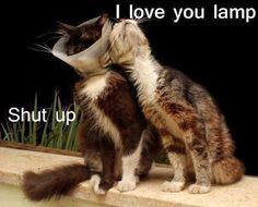 funny cats in love