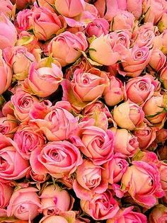 Brabourne Farm: Love .... Roses
