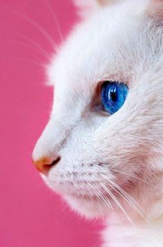 Pretty Boy | Flickr: partage de photos!