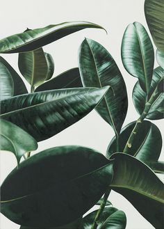 Foliage is a obvious recall of tropical plants for the Molteni&C Materia collection.