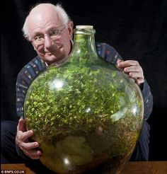 50 Year old Bottle Garden:   Still going strong: Pensioner David Latimer from Cranleigh, Surrey, with his bottle garden that was first planted 53 years ago and has not been watered since 1972 - yet continues to thrive in its sealed environment