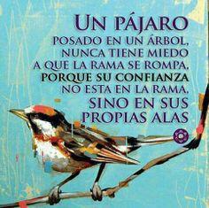 Un Pájaro y su confianza