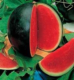<WATERMELON> How to Grow Watermelons, Cantaloupes and Cucumbers in crowded spaces using a simple trellis Sugar Baby Watermelon, How To Grow Watermelon, Watermelon Plant, Sweet Watermelon, Fruit Garden, Edible Garden, Vegetable Garden, Garden Seeds, Growing Vegetables