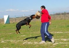 Here is a great review siteif you are looking for training help - http://dogtraining-y5txhmn0.reviewsatbest.com