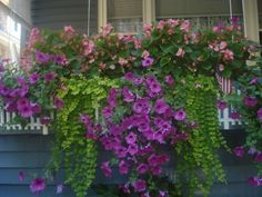 Window box on my front porch. Summer 2013