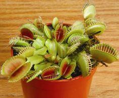 240 Best Carnivorus Plants Images In 2013 Carnivorous