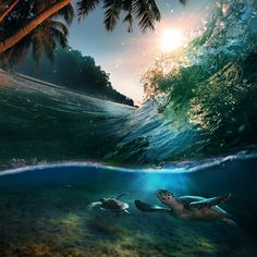 Turtles ride a wave at sunset, the Maldives. 20incredible photographs that capture the essence ofthe moment