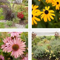 composite of four types of rain gardens to help you plan