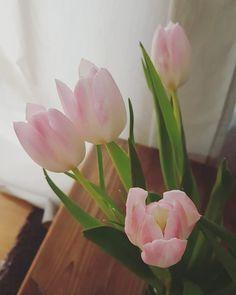 #goodmorning #gutenmorgen #sunday #sundayvibes #wokeuplikethis #tulips #tulpen #frühlingsboten #frühlingsblumen #rose #colours #beautifulnature #flowersofinstagram #flower #blush #enjoythelittlethings #livelovelaugh später geht's nach #düsseldorf zu einem kleinen #sonntagsspaziergang und vielleicht statten wir @yomaro_dus einen Besuch ab