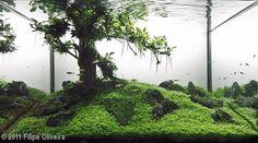 Aquário plantado - landscape