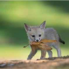 Pup with a leaf