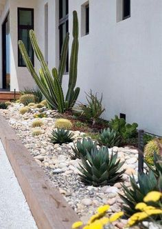 Pretty Frontyard Landscaping Design Ideas - A neat front yard landscape always sends a message of coolness, peace and healthy ambiance to any eyes that views it. A bush rose garden filled with v. Desert Landscaping Backyard, Succulent Landscaping, Modern Landscaping, Front Yard Landscaping, Landscaping Ideas, Arizona Backyard Ideas, Desert Gardening, Modern Landscape Design, Landscape Plans